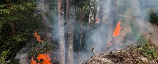 Zwei Alarmierungen zu Waldbränden