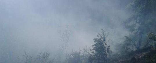 Alarmierung Waldbrand