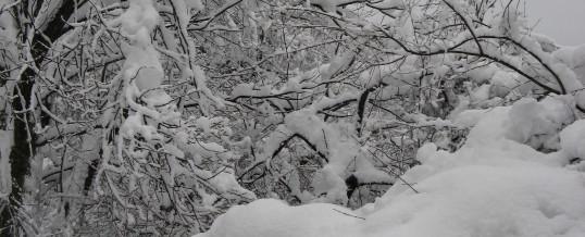 Schneeeinsätze